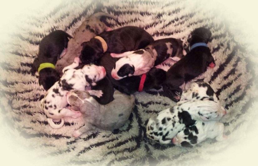 Tundra-pups2