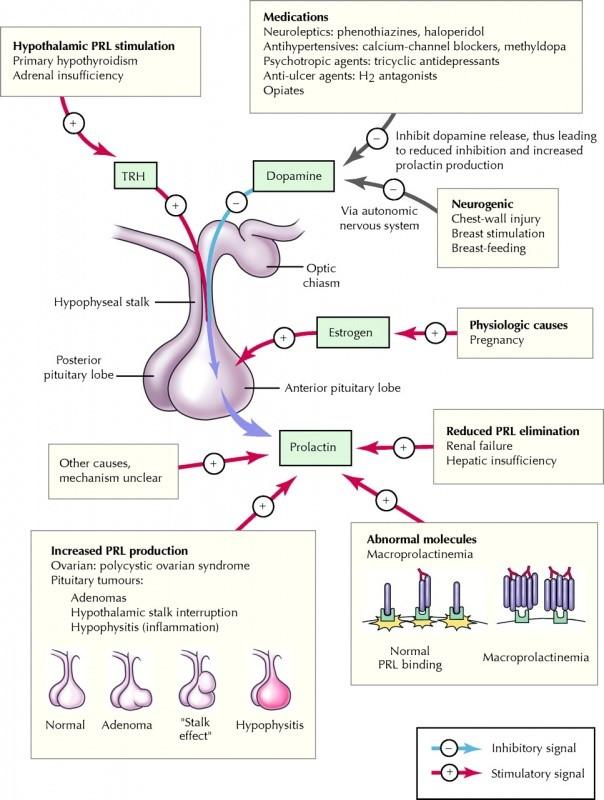 Afbeelding hypofyse tumor ratten