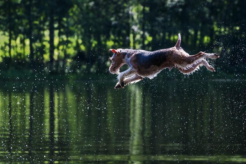 dog-water